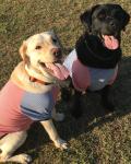 LABRADOR RETRIEVER(ラブラドールレトリバー)ラグランボーダーSTAR Dog Tシャツ【大型犬用】