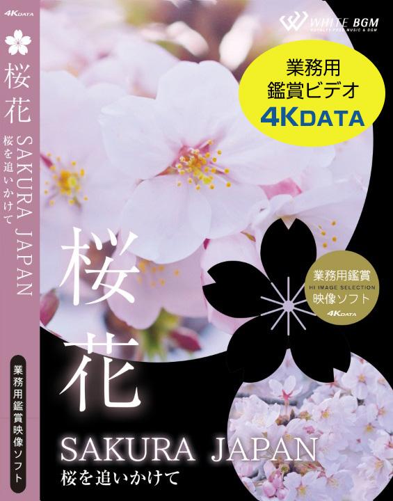 桜花4Kデータ