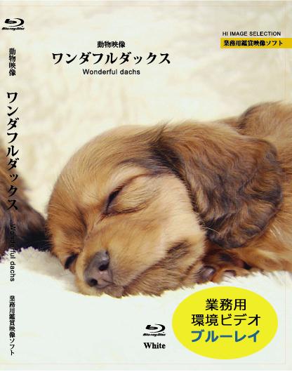 業務用鑑賞映像ソフト 犬ブルーレイ