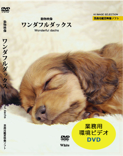 業務用鑑賞映像ソフト 犬DVD