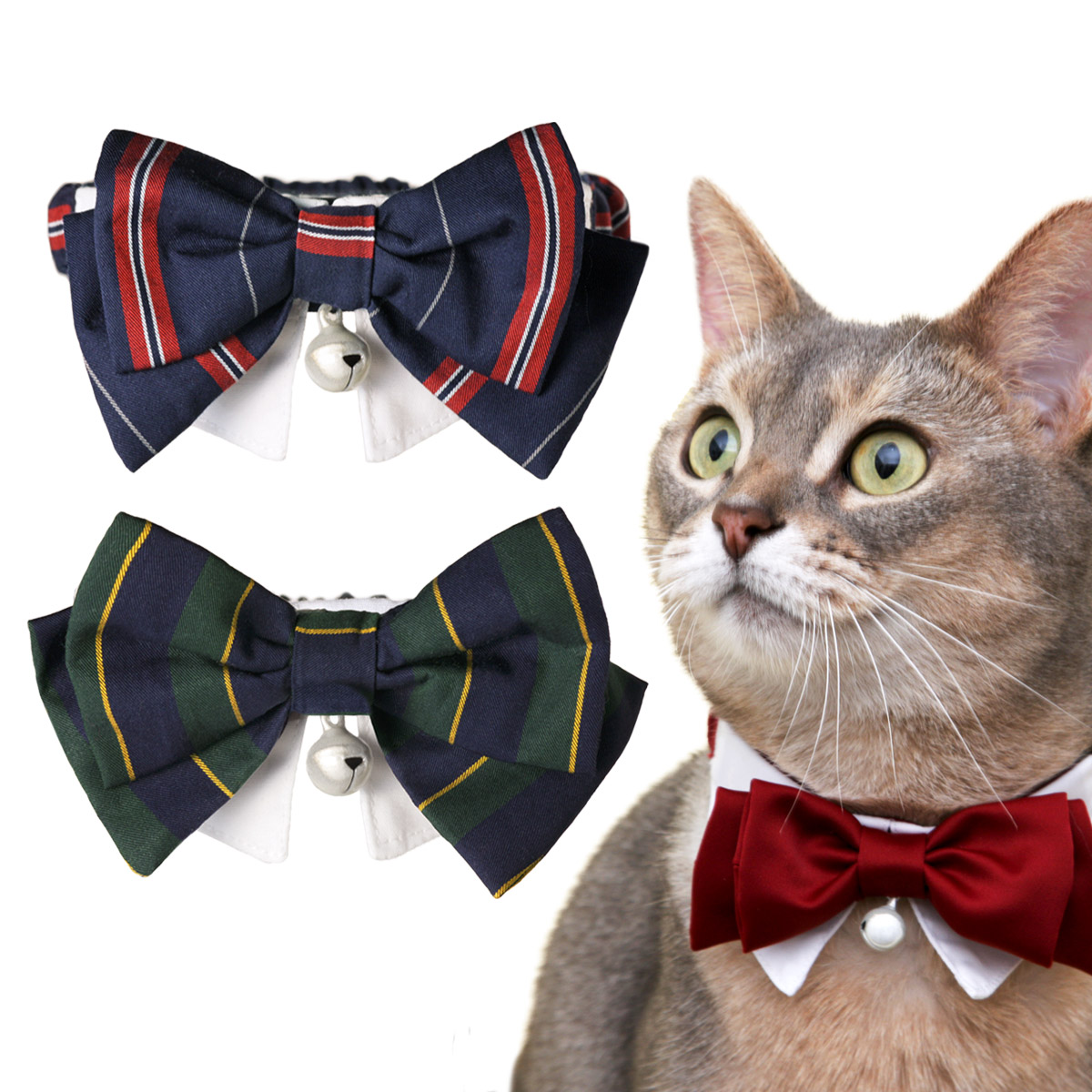 猫の暮らし JKシュシュカラー