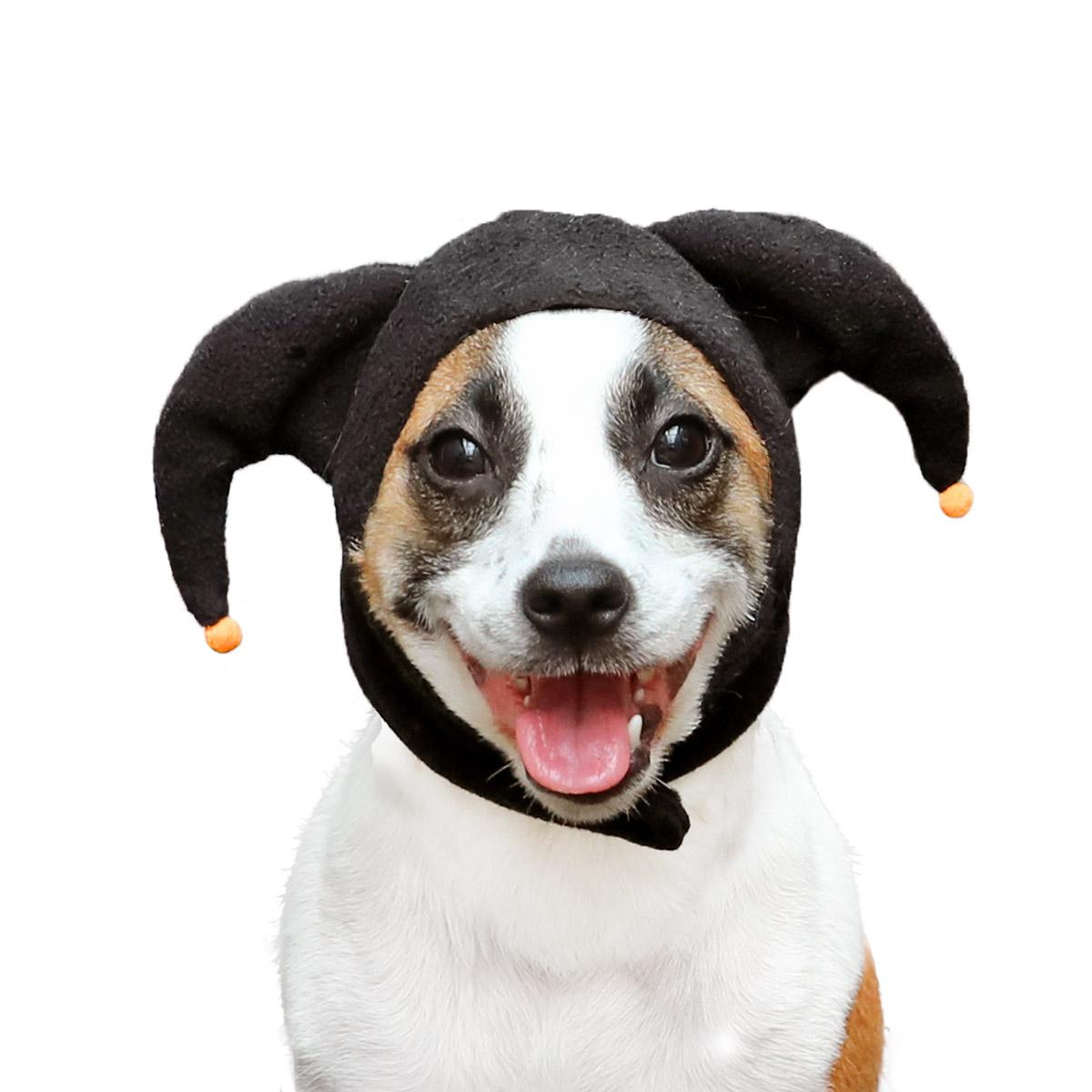 犬と生活 ハロウィンハット・デビル
