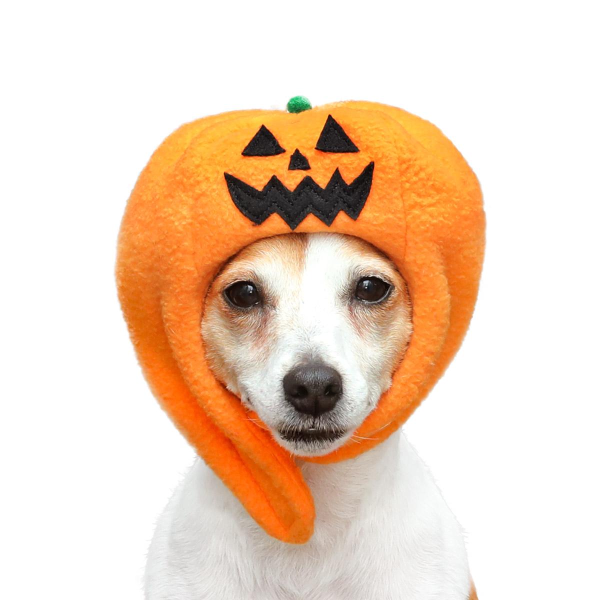 犬と生活 ハロウィンハット・かぼちゃ