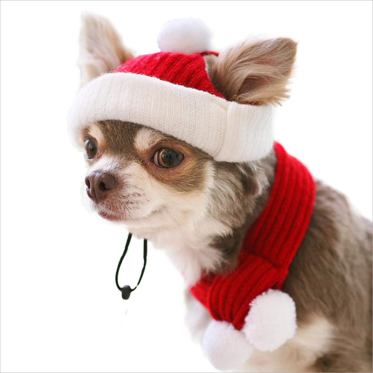 犬と生活 サンタハット&マフ
