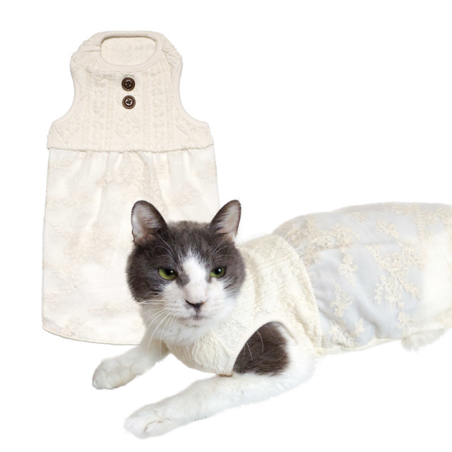 猫の暮らし レーシーワンピースキャット