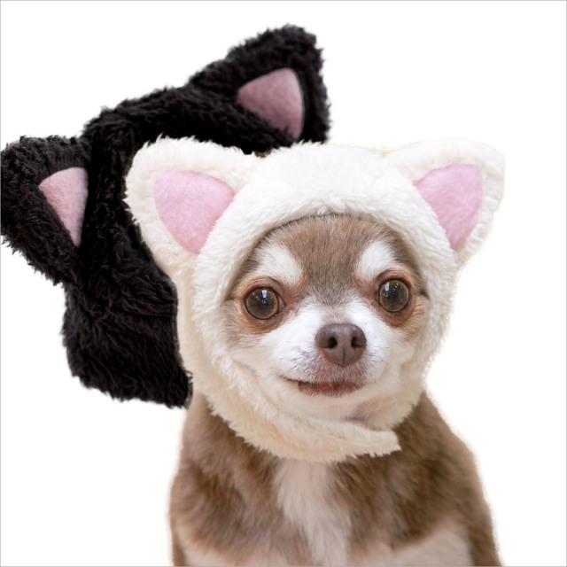 犬と生活 猫耳ハット