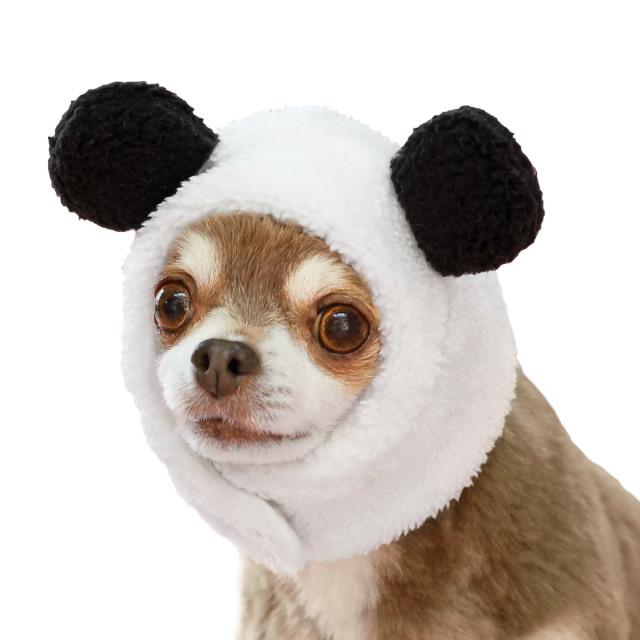 犬と生活 パンダハット