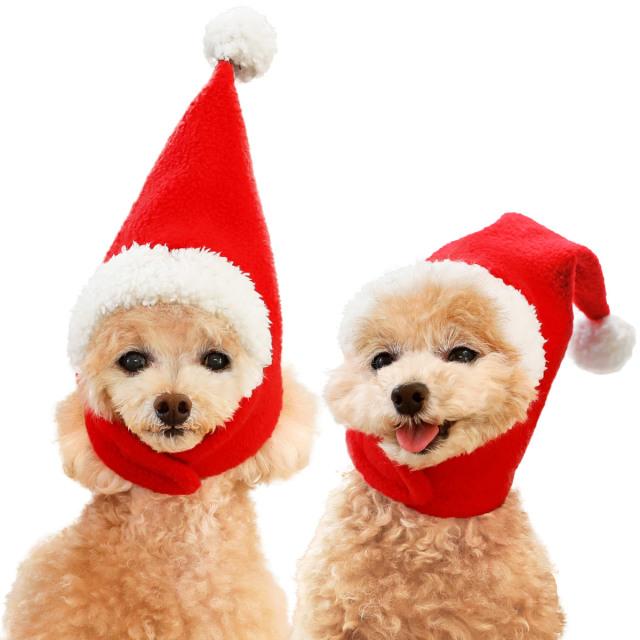 犬と生活 サンタハット