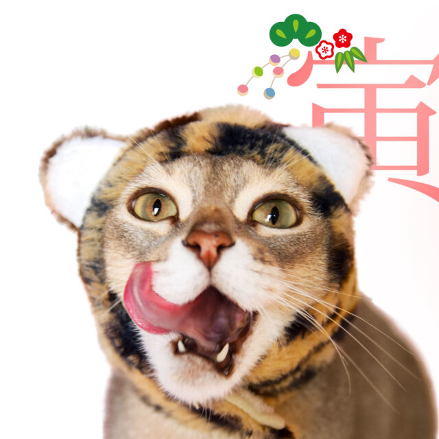 犬と生活 猫の暮らし 干支ハット トラ