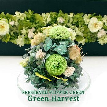 Green Harvest (GLASS DOME) :グリーン ハーベスト(プリザーブドフラワーガラスドーム アレンジ【送料無料】