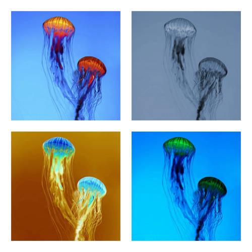The Raft: The Jellyfish E.P.s 【予約受付中】