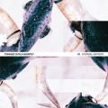 Tomasz Chyla Quintet: Eternal Entropy 【予約受付中】
