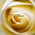 Stefano Panunzi: A Rose 【予約受付中】