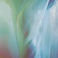Ele Ypsis: Meiosis(LP) 【予約受付中】