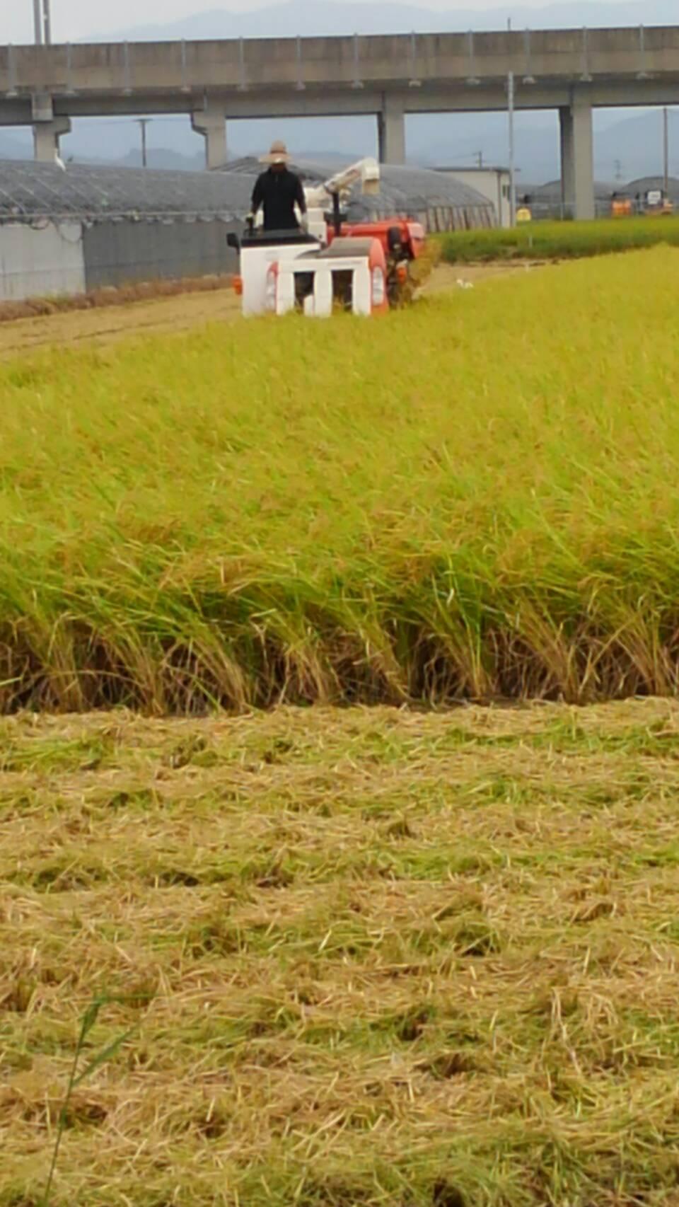 【自然栽培】ヒノヒカリの6年目冬期湛水自家採種無肥料無農薬・玄米3kg レターパック