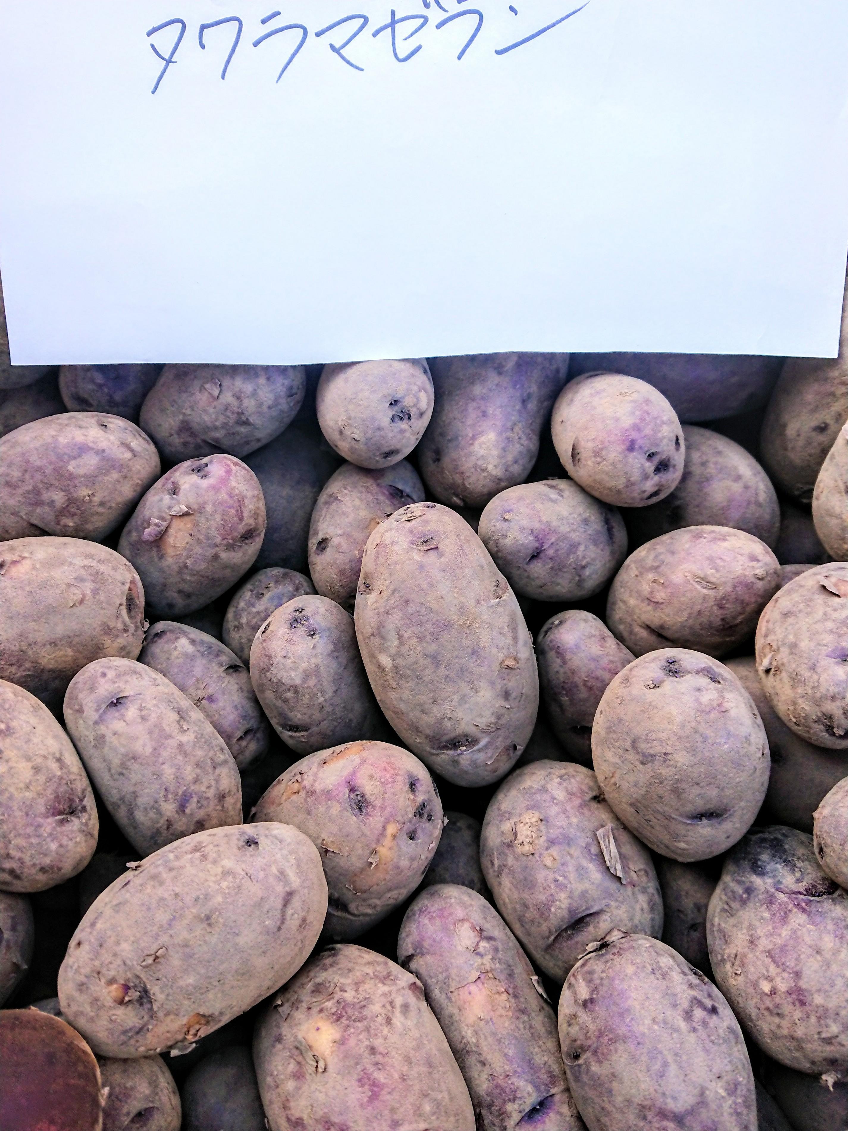 【自然栽培】じゃがいも  2021長崎県産・固定種(タワラマゼラン) 自家採種・無農薬・無肥料 じゃが2kg