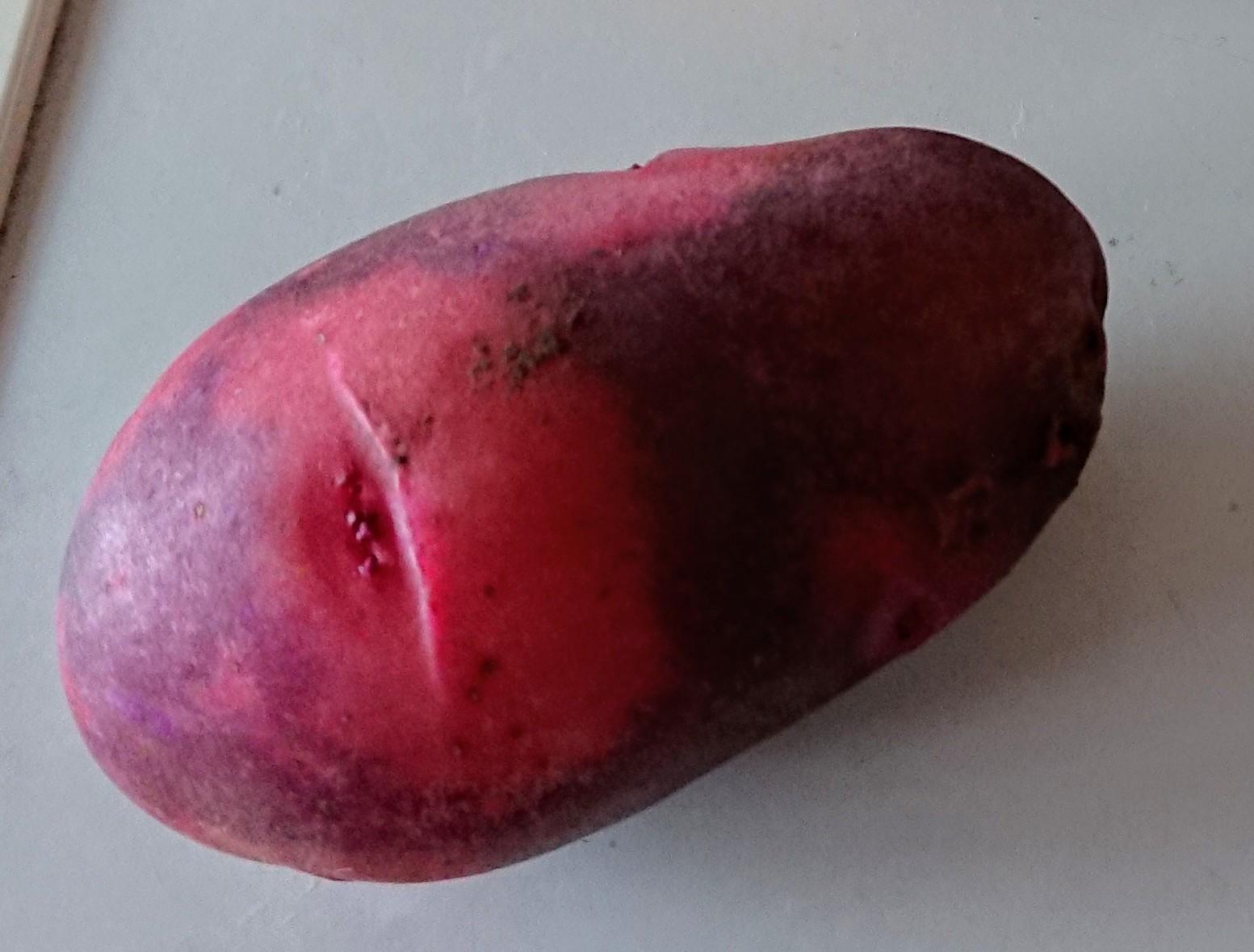 【自然栽培】じゃがいも 2020グランドペチカ(デストロイヤー)紫×赤 1kg  長崎県産 固定・自家採種