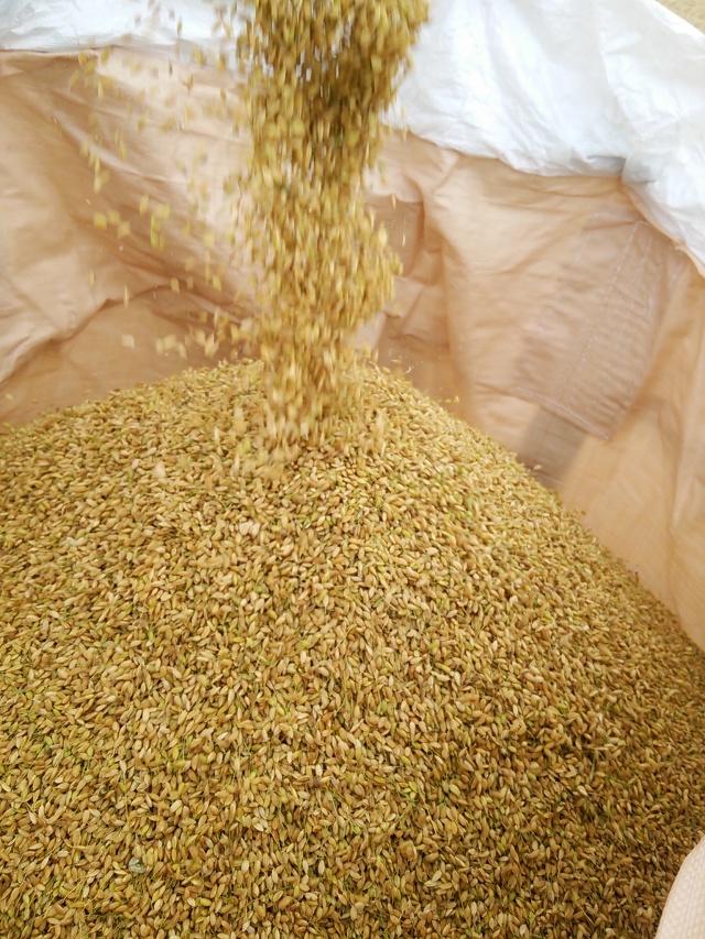 【自然栽培】 完全無施肥・無農薬・冬期堪水 平成27年度・熊本県産ヒノヒカリの6年目 精米5kg
