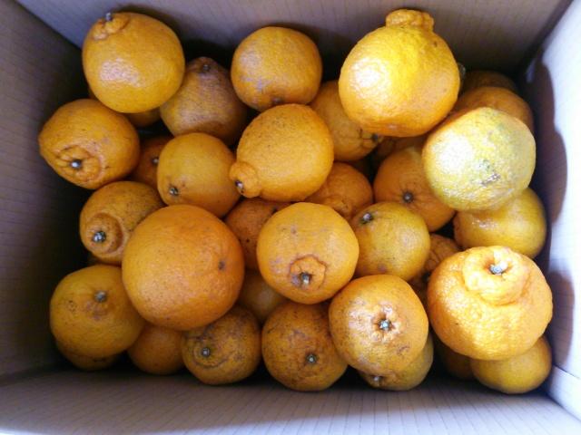 【自然栽培】しらぬい5kg 熊本県産 Yes organic farmオリジナル 規格外品 無農薬・無化学肥料・除草剤不使用