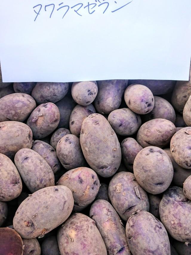 【自然栽培】じゃがいも  2021長崎県産・固定種(タワラマゼラン) 自家採種・無農薬・無肥料 じゃが1kg