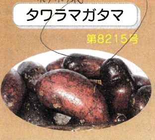 【自然栽培】じゃがいも  2019長崎県産・固定種(タワラマガタマ) 秋じゃが1kg