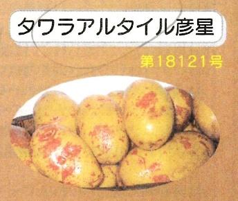 売り切れ【自然栽培】じゃがいも  2019長崎県産・固定種(タワラアルタイル彦星) 秋じゃが1kg