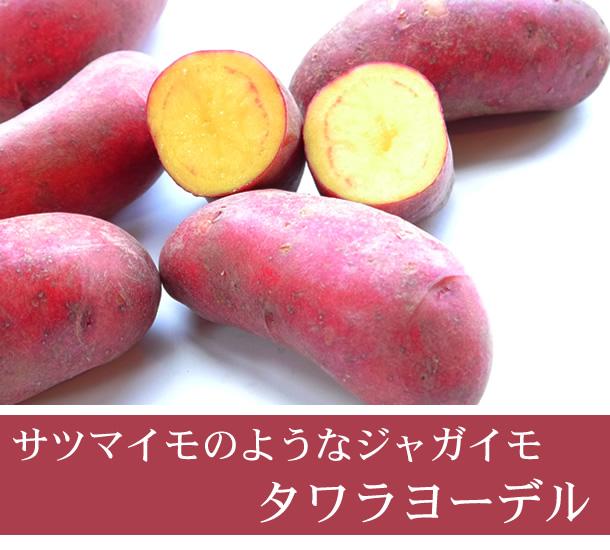 【自然栽培】2019じゃがいも  長崎県産・固定種(タワラヨーデル) 秋じゃが1kg