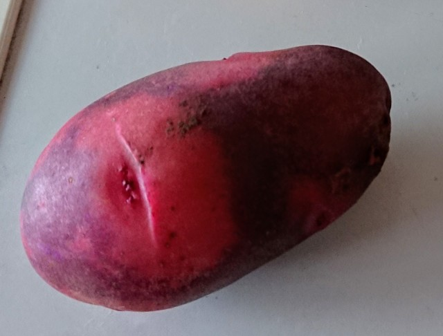 【自然栽培】じゃがいも 2021グランドペチカ(デストロイヤー)紫×赤 1kg  長崎県産 固定・自家採種