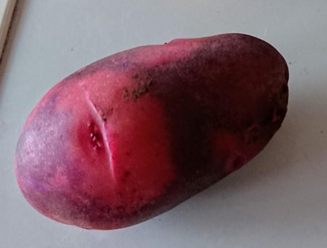【自然栽培】じゃがいも グランドペチカ(デストロイヤー)紫×赤 1kg  長崎県産 固定・自家採種