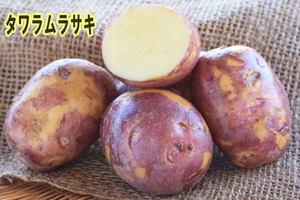 【自然栽培】じゃがいも  2019長崎県産・固定種(タワラムラサキ) 秋じゃが1kg