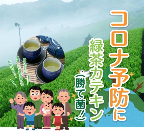 コロナ 緑茶