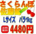 【贈答用・送料無料】さくらんぼ佐藤錦 Lサイズ バラ詰め 1Kg