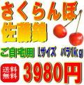 【ご自宅用・送料無料】さくらんぼ佐藤錦 Lサイズ バラ詰め 1Kg