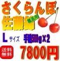 【送料無料】佐藤錦 Lサイズ 500gパック詰め×2