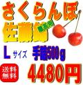 【贈答用・送料無料】佐藤錦 Lサイズ 手詰め 500g