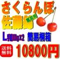 【送料無料】(簡易タイプ)桐箱入り 佐藤錦 L 500g×2