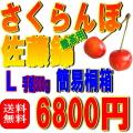 【送料無料】(簡易タイプ)桐箱入り 佐藤錦 L 500g