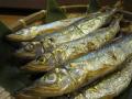 厳選 北海道常呂町 サロマ湖産 きゅうり魚一夜干し(冷凍) 1パック(約350g8〜14匹)
