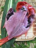 金目鯛(近海物)