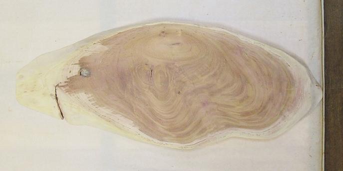 【送料・手数料無料】 山成林業 中型無垢一枚板 KC-563 ケヤキ 小型看板に最適