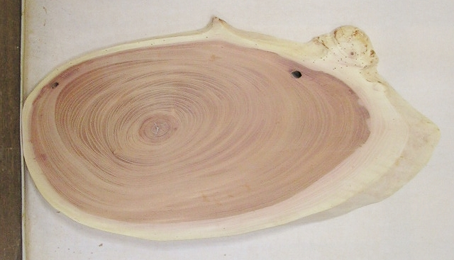 【送料・手数料無料】 山成林業 小型無垢一枚板 KD-569 ケヤキ 小型看板に最適