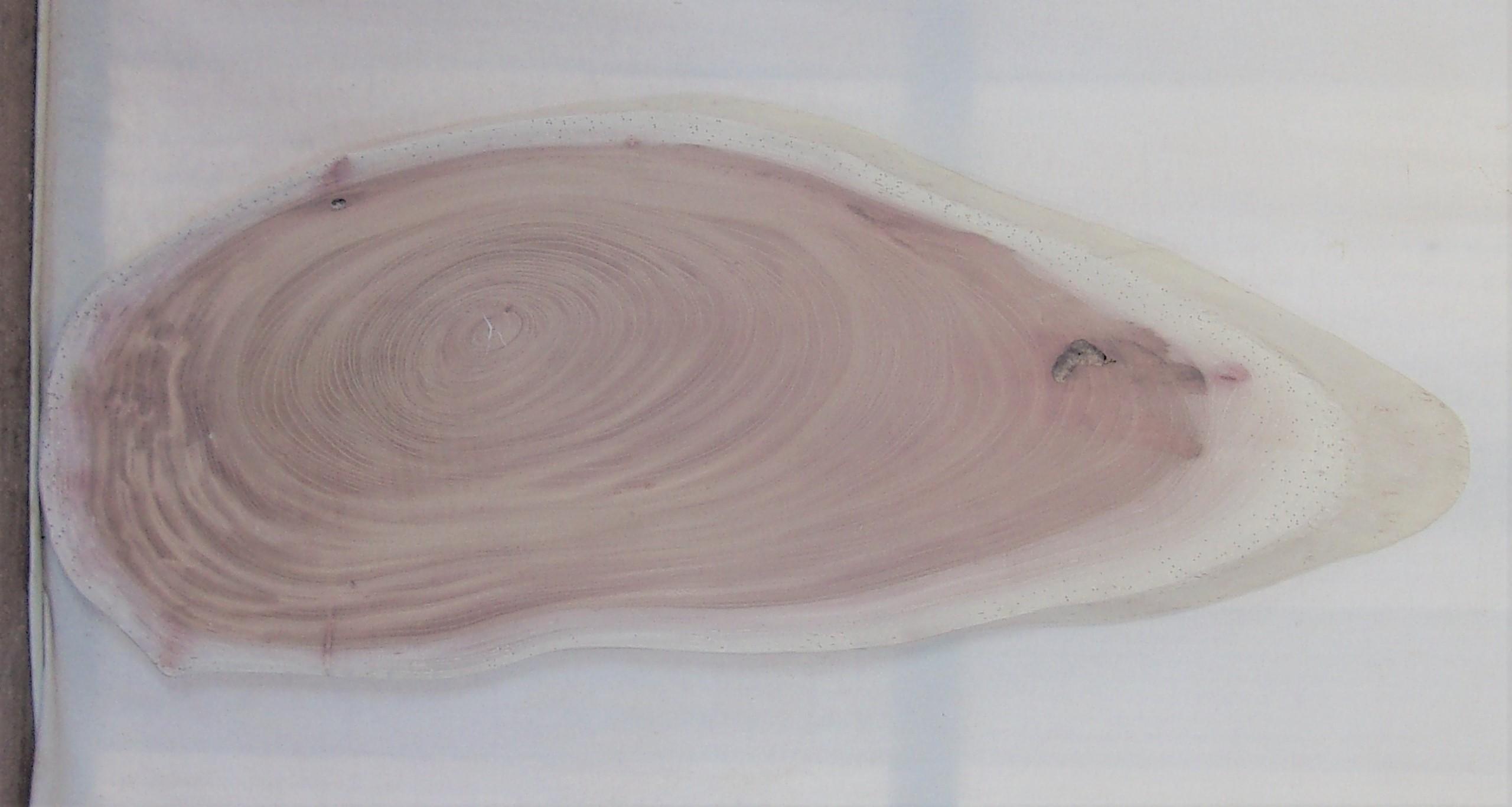 【送料・手数料無料】 山成林業 中型無垢一枚板 KC-580 ケヤキ 中型看板に最適