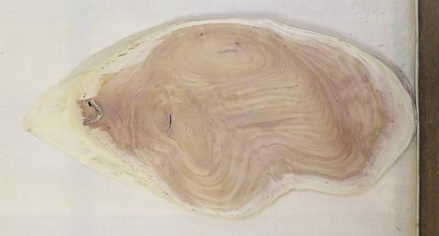 【送料・手数料無料】 山成林業 小型無垢一枚板 KD-562 ケヤキ 小型看板に最適