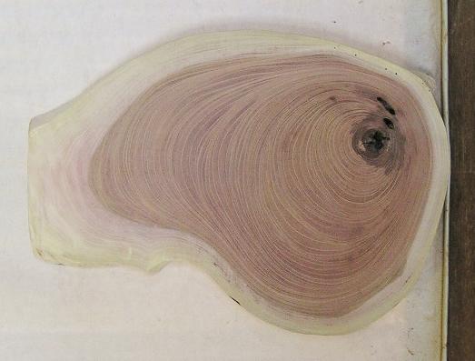 【送料・手数料無料】 山成林業 特小無垢一枚板 KE-564 ケヤキ看板に最適