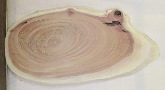 【送料・手数料無料】 山成林業 小型無垢一枚板 KD-565 ケヤキ 小型看板に最適