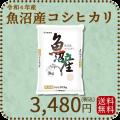 新米【令和2年産】【送料無料】【高級銘柄】 新潟県魚沼産コシヒカリ 5kg