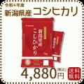 【H30年産】【送料無料】白米 新潟県産コシヒカリ 10kg(5kg×2)