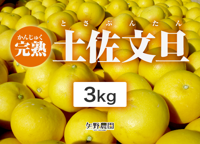 矢野農園の完熟土佐文旦3kg