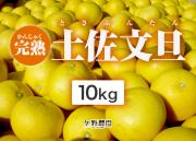 矢野農園の完熟土佐文旦10kg