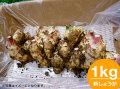 「土佐の大地のそのまんま土付き新大生姜(しょうが)」約1.0kg